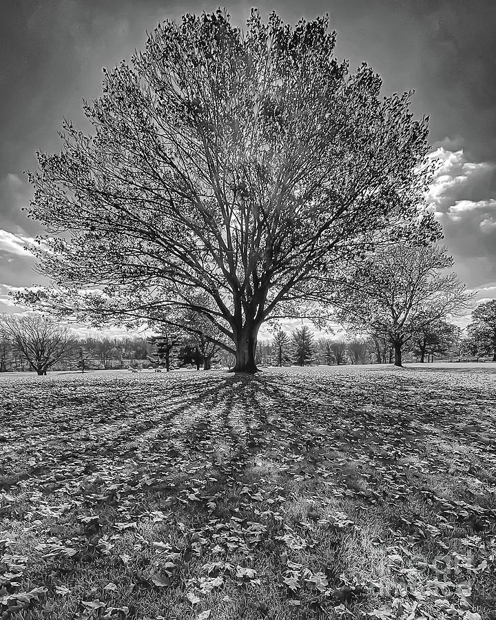 Autumn Leaves Bare Trees Long Shadows Photograph