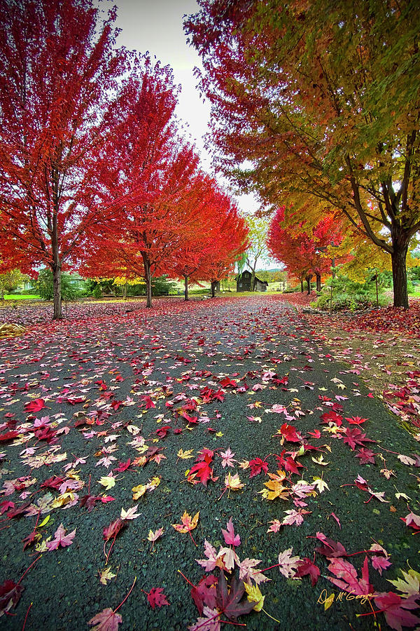 Autumn Leaves by Dan McGeorge