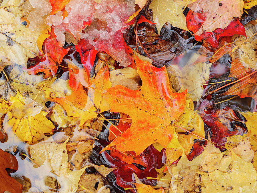 Autumn Leaves Forest Floor by Todd Bannor