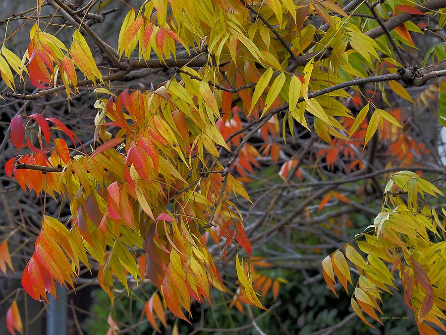 Autumn Lingering by Richard Thomas
