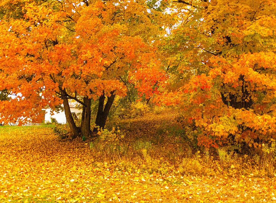 Autumn Maine  Photograph by Ali Bailey
