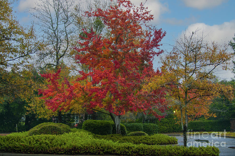 Autumn Majesty Bursting With Red And Yellow Leaves Photograph