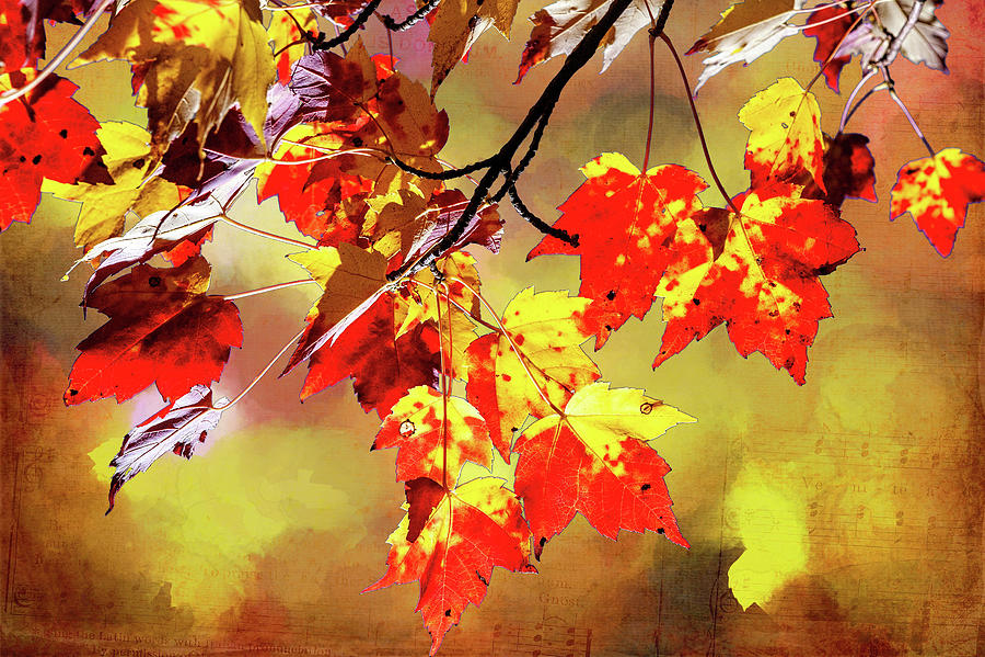 Autumn Melody fx by Dan Carmichael