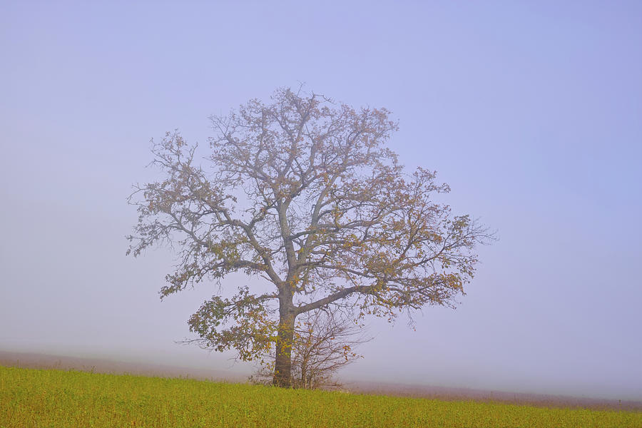 Landscape Photograph -  Autumn mist by Karine GADRE