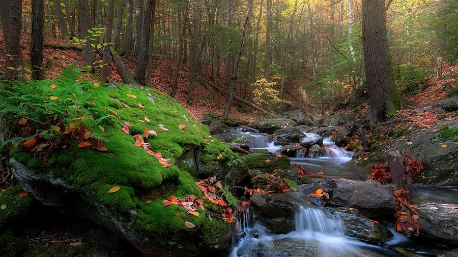 Autumn Mountain Stream by Bill Wakeley