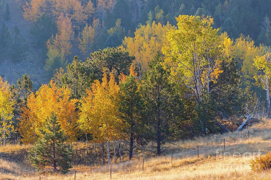 Autumn Mountainside Photograph
