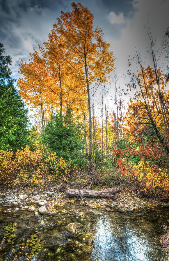 Autumn on Silver Creek Photograph by Eden Watt