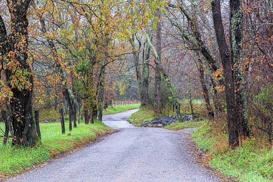 Autumn on Sparks Lane by Douglas Wielfaert