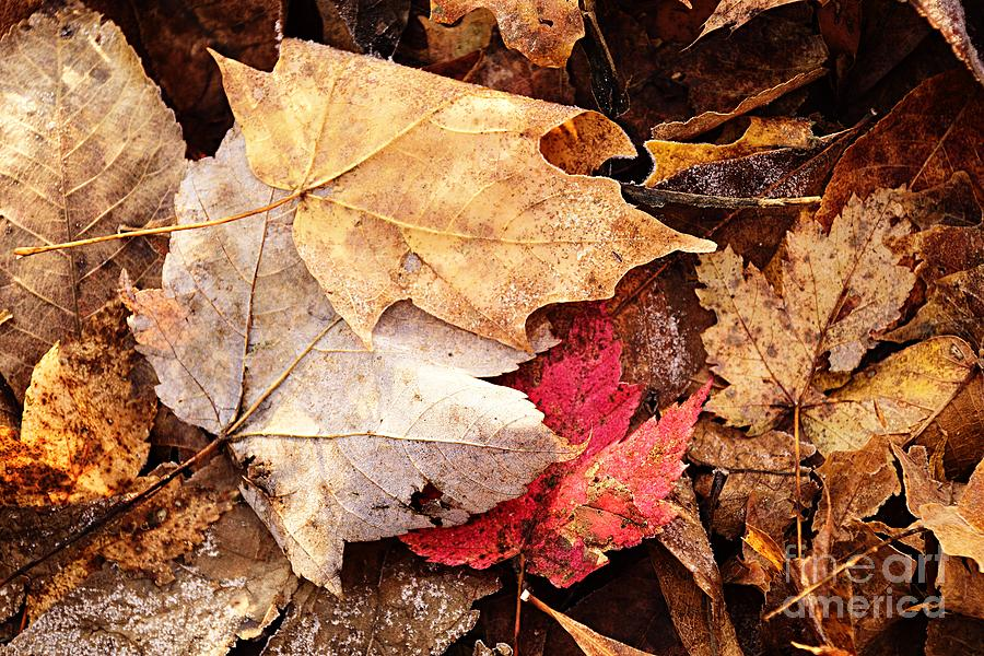 Autumn on the Ground by Larry Ricker