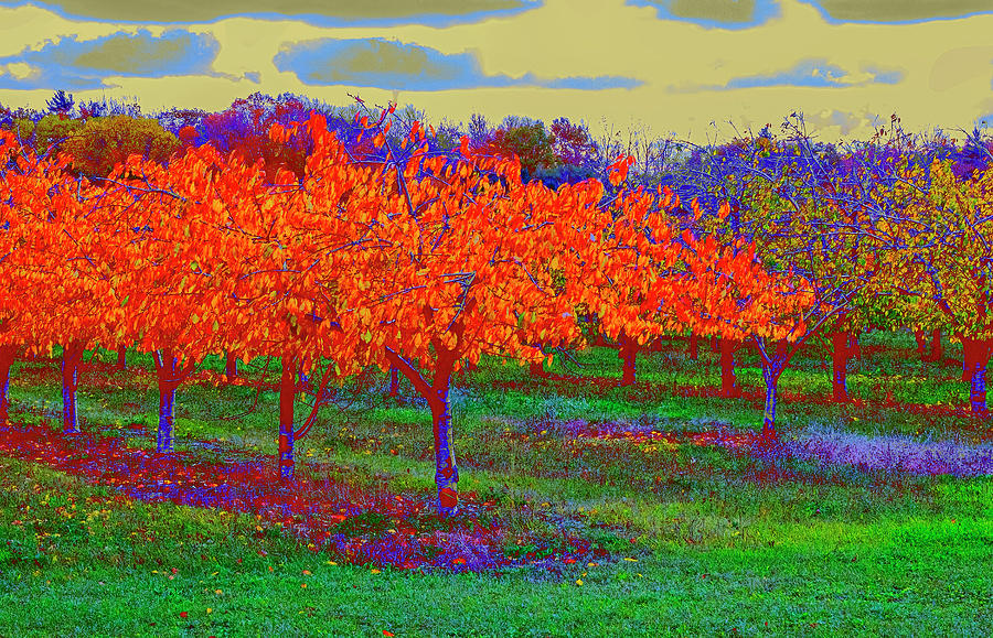 Autumn Orchard by Tom Singleton