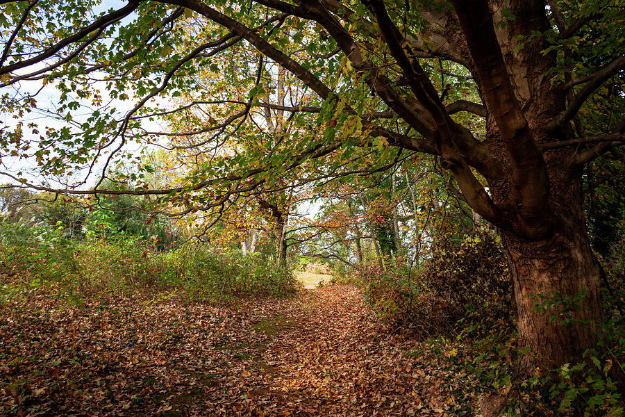 Autumn Path by Amy Sorvillo