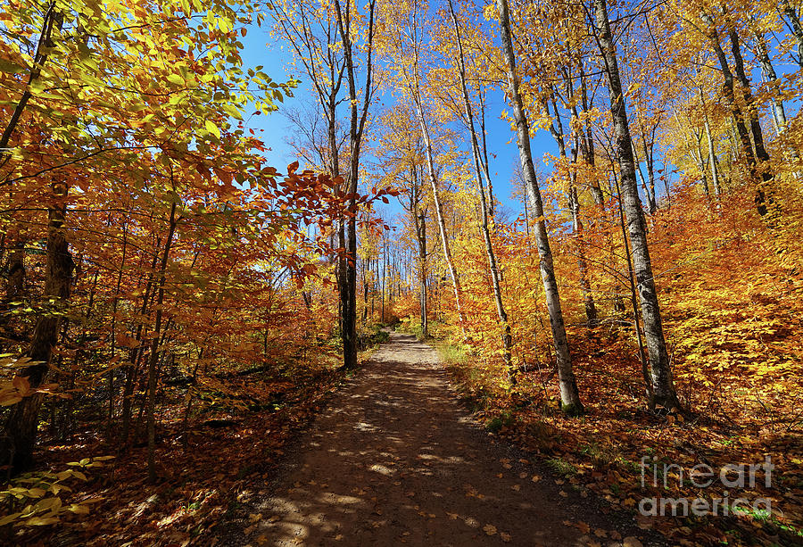 Autumn Path From Miners Falls Photograph