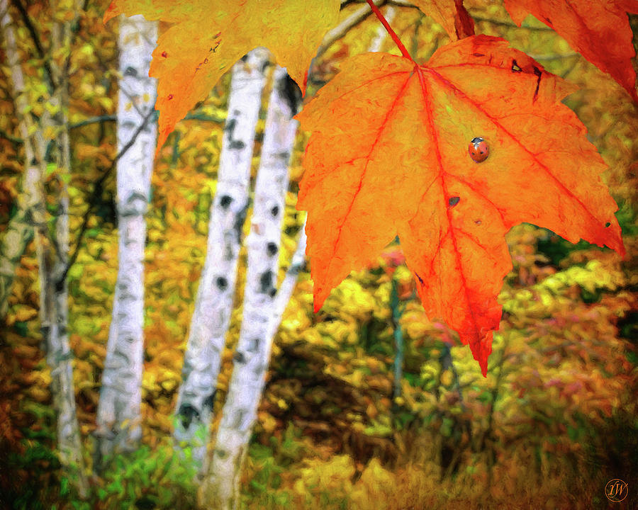 Autumn Perspectives by Rick Wiles