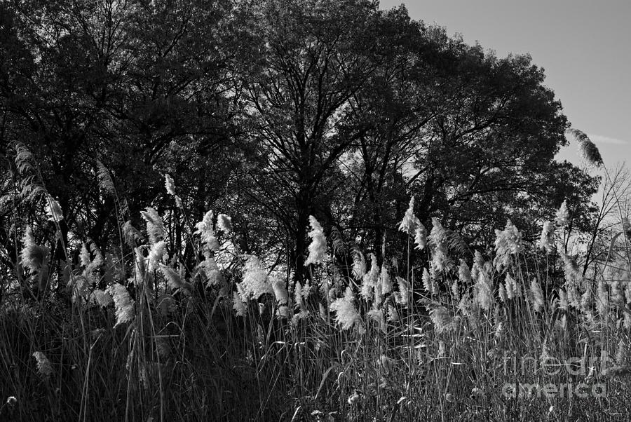Landscape Photograph - Autumn Prairie in Black and White by Frank J Casella