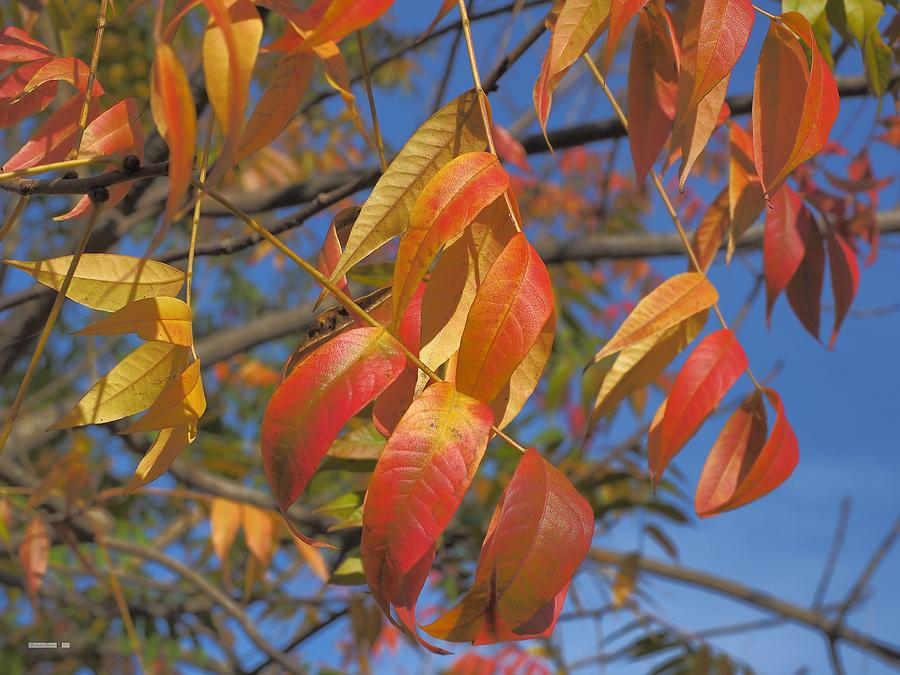 Autumn Progressing by Richard Thomas