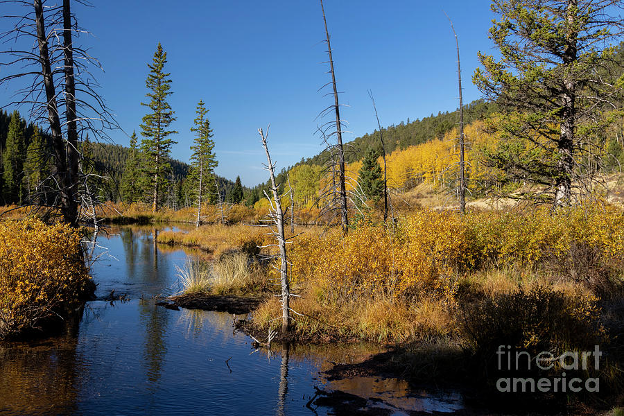 Autumn Photograph - Autumn Reflections on Anne-Marie Falls Trail by Steven Krull
