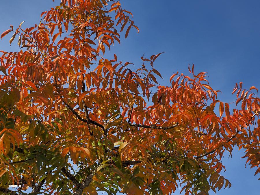 Autumn  by Richard Thomas