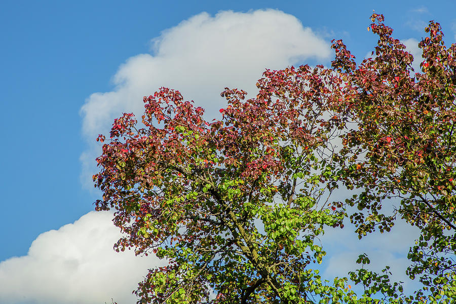 Autumn Sky by Cate Franklyn