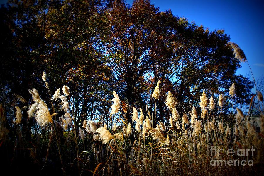 Nature Photograph - Autumn Splendor by Frank J Casella
