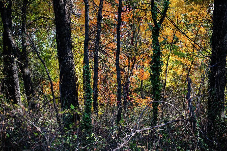 Autumn Photograph - Autumn Splendor  by John Heywood