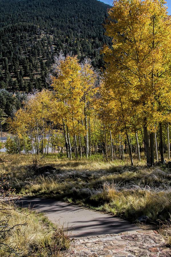 Autumn Stroll Photograph by Alana Thrower