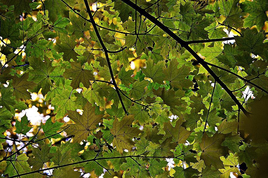 Autumn Sun by Thomas Schroeder