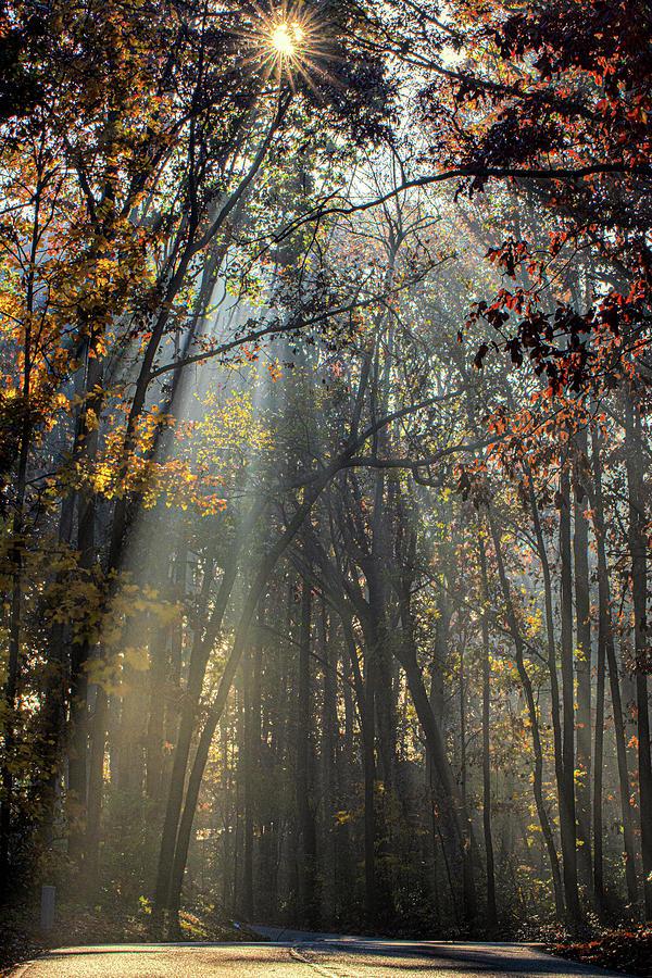 Autumn Sunbeams by Douglas Wielfaert