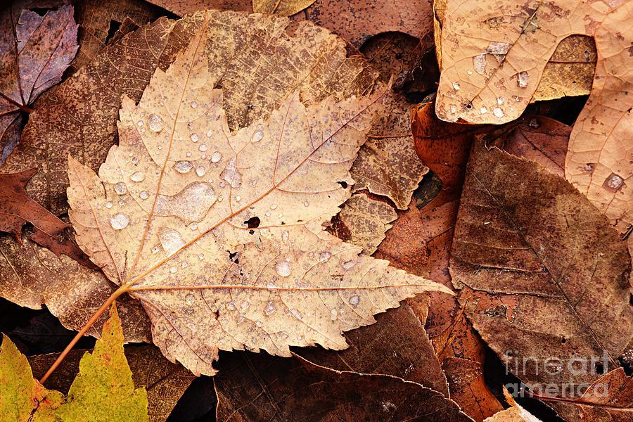 Autumn Tears by Larry Ricker