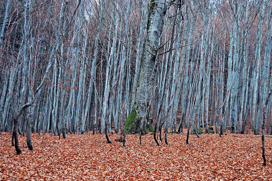 Autumn by Thomas Schroeder