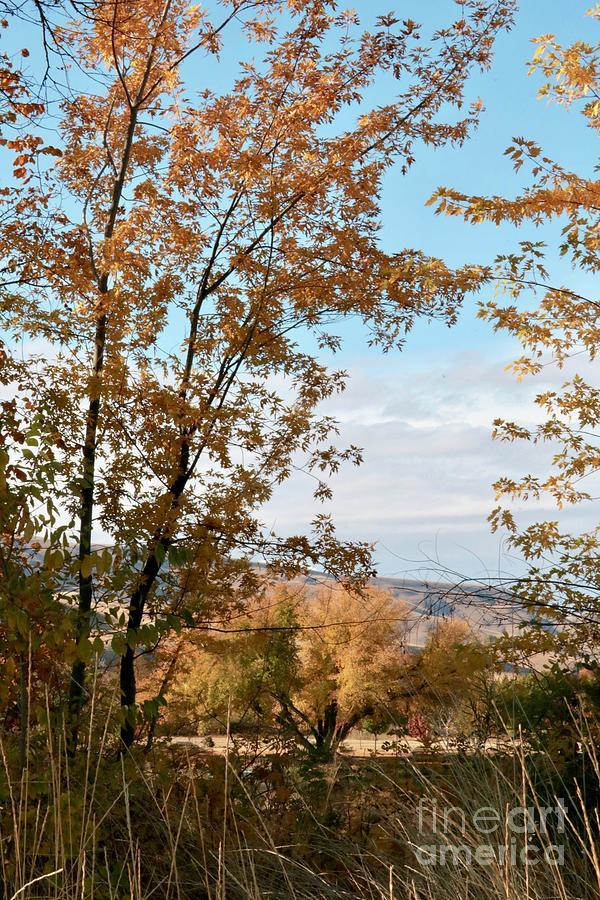 Autumn Time in Prosser by Carol Groenen