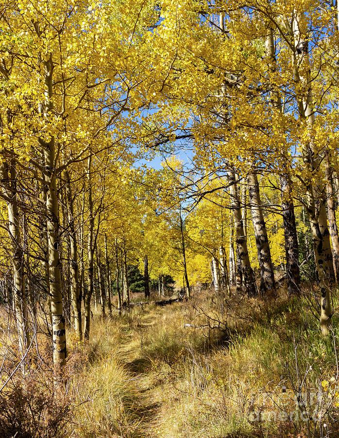 Autumn Trail On Anne-marie Falls Trail Photograph