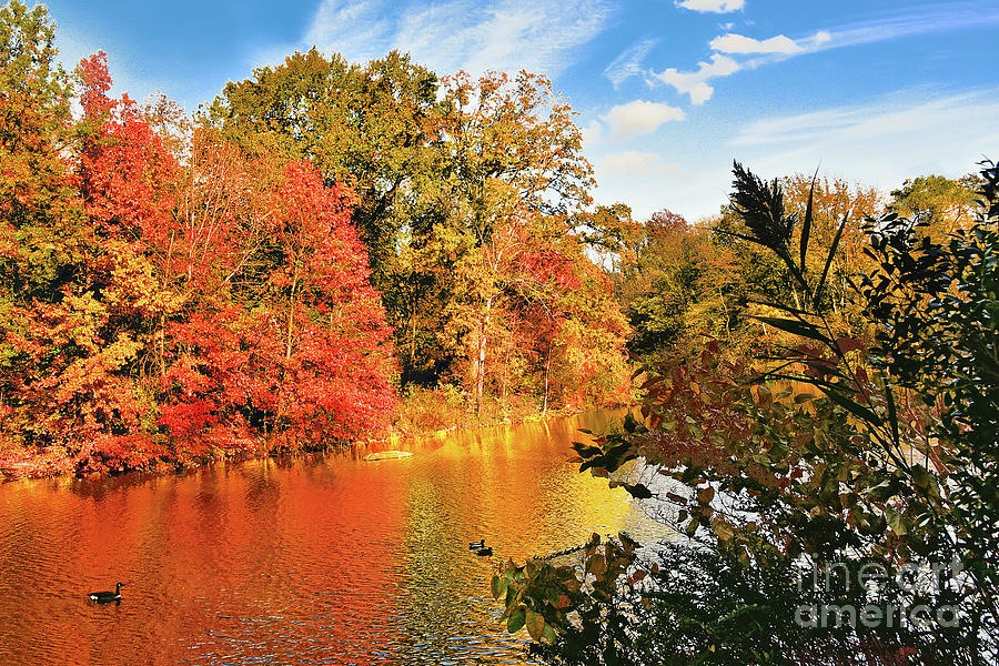 Autumn Transformation Central Park Lake by Regina Geoghan