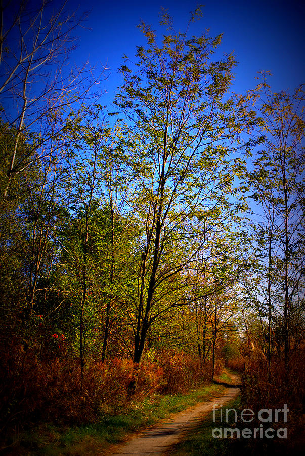 Landscape Photograph - Autumn Tree Along the Trail by Frank J Casella