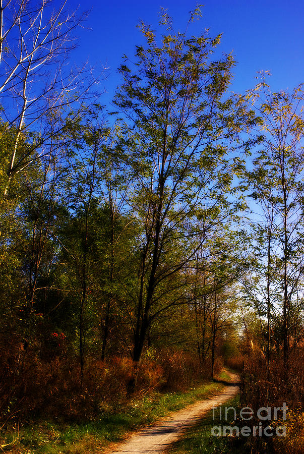 Landscape Photograph - Autumn Tree Along the Trail - Painterly by Frank J Casella