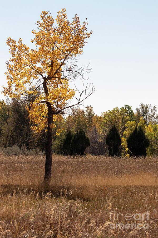 Autumn Photograph - Autumn Tree by Nicki Hoffman