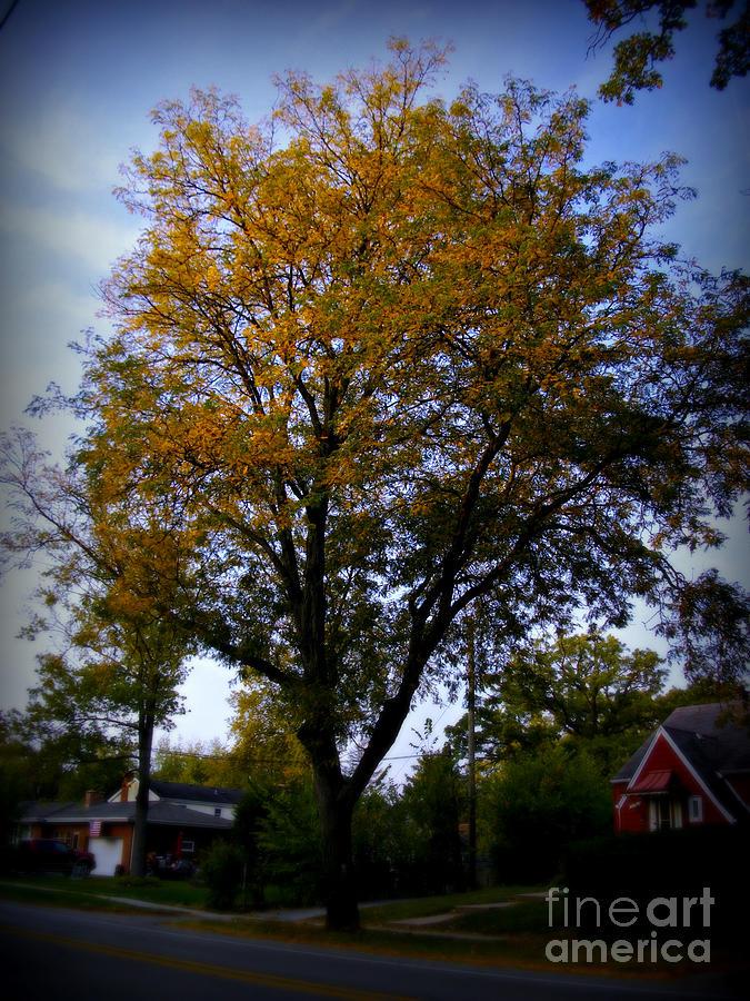 Autumn Trees Morning Sun Golden Hour Photograph