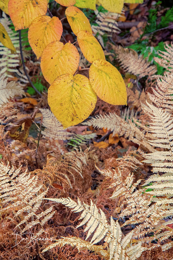 Autumn Undergrowth 3290 Photograph