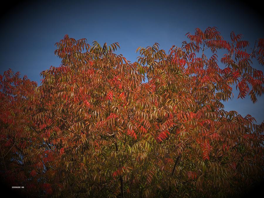 Autumn Vignette by Richard Thomas