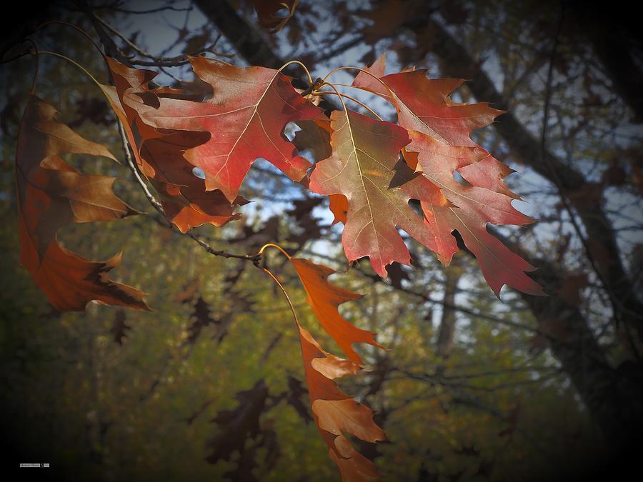 Autumn Waves by Richard Thomas