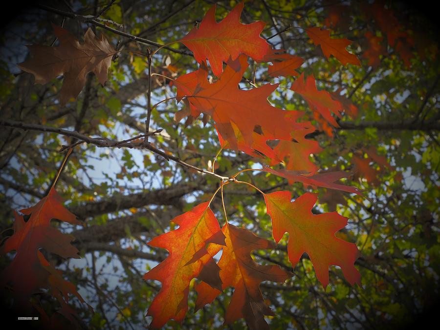 Autumn Waving by Richard Thomas