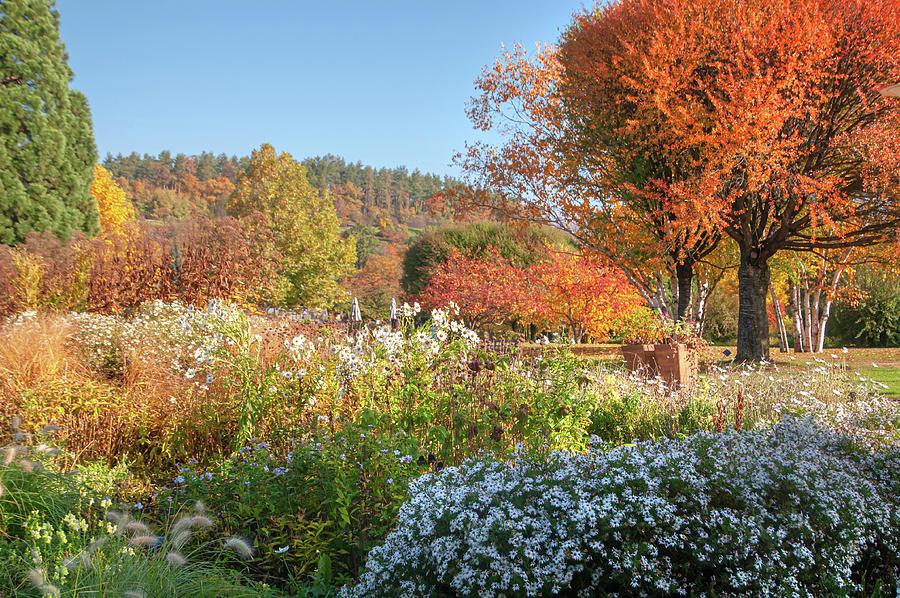 Autumnal Display in Prague Botanic Garden by Jenny Rainbow
