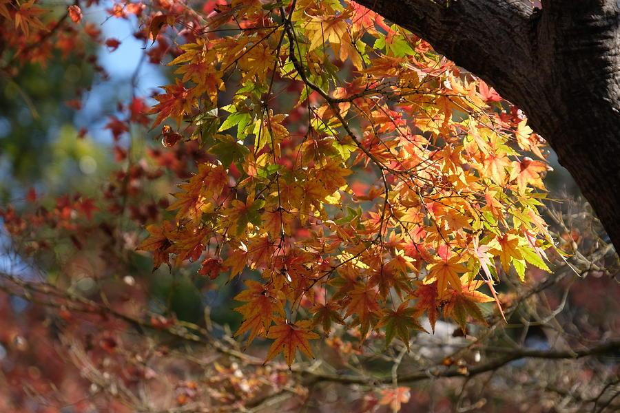 Autumnal Foliage by Ricardo J Ruiz de Porras