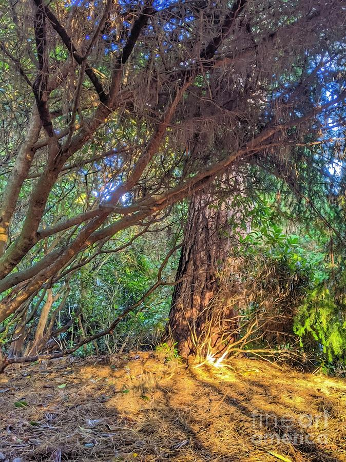 Autumnal Forest In The Afternoon Eighteen by Abbie Shores