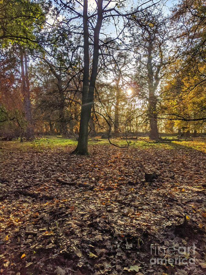 Autumnal Forest In The Afternoon Nineteen by Abbie Shores