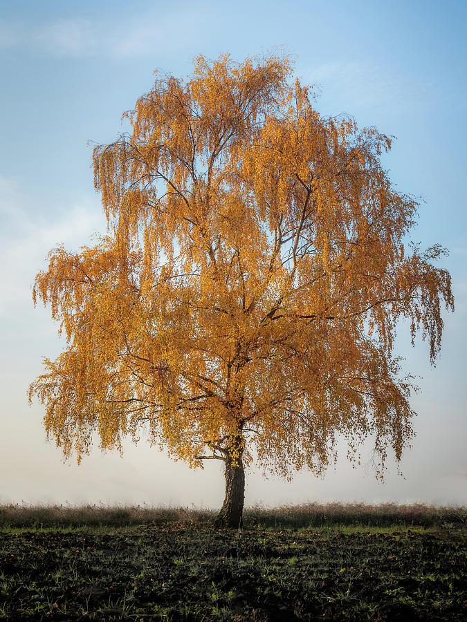 Autumnal Tree Photograph