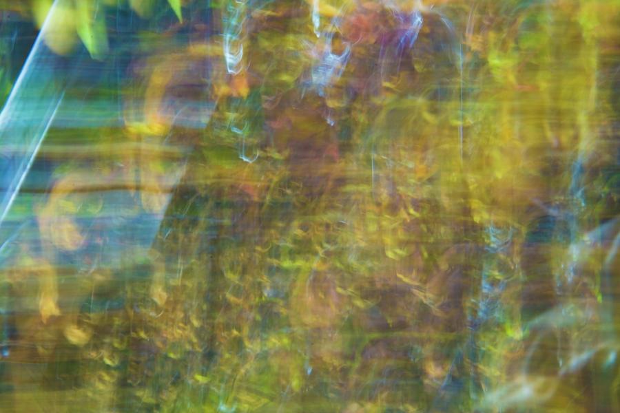 Autumnal Vibrance by Yulia Kazansky
