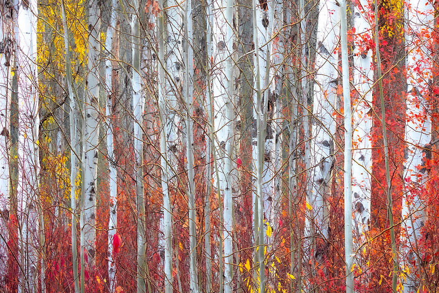 Autumnly by Ryan Smith