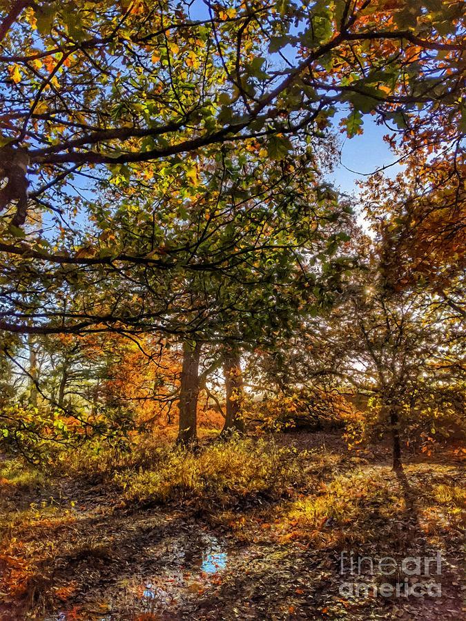 Autumns Blush One by Abbie Shores