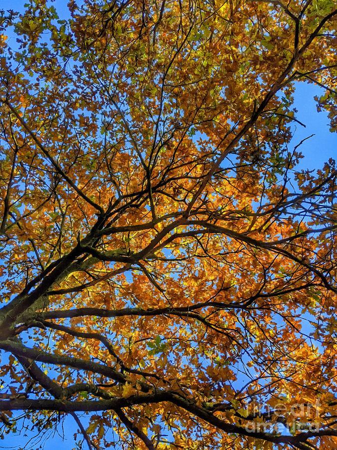Autumns Blush Three by Abbie Shores