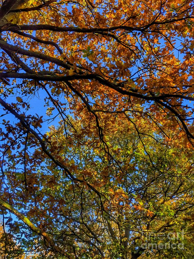 Autumns Blush Two by Abbie Shores